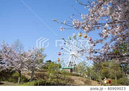 岡崎南公園 春の遊園地エリア(観覧車) 80909023