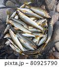 豊漁 80925790