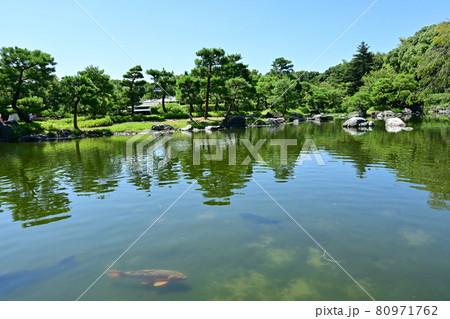 日本庭園・白鳥庭園(木曽三川をイメージした池)と鯉 80971762