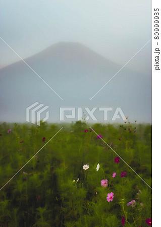 山中湖花の都公園 朝靄のコスモス畑と富士山 80999935