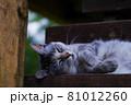 公園の見晴らし台の階段で休んでいる猫(サバトラ) 81012260