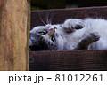 公園の見晴らし台の階段で休んでいる猫(サバトラ) 81012261