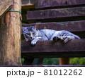 公園の見晴らし台の階段で休んでいる猫(サバトラ) 81012262