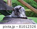 公園の階段で毛づくろいをしている猫(サバトラ) 81012326