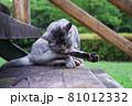 公園の階段で毛づくろいをしている猫(サバトラ) 81012332