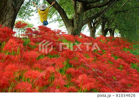 木漏れ日の中咲く土手沿いの彼岸花群生と新緑の桜の木の下、帽子を被った手を振る一人の女性 81034626