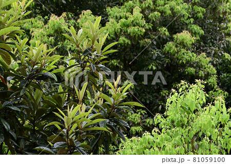 (フラワーツーリズム)樹木の繁る緑地帯:背景明瞭 81059100