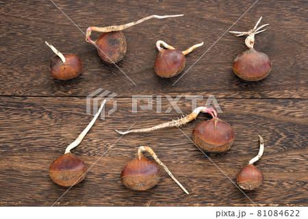 木のテーブルの上の根の出た栗 81084622