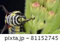 バグ 昆虫 苦悩 81152745
