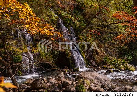 (山梨県)吐竜の滝(どりゅうのたき) 紅葉 81192538