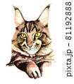 水彩画 猫 メインクーン 81192888