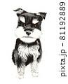 水彩画 犬 テリア 81192889