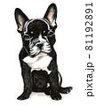 水彩画 犬 フレンチブルドッグ 81192891