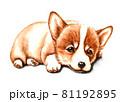 水彩画 犬 コーギー 81192895