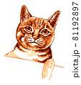 水彩画 猫 キジトラ 81192897