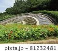 稲毛海浜公園日時計前の花壇の百日草の赤と黄色の花 81232481