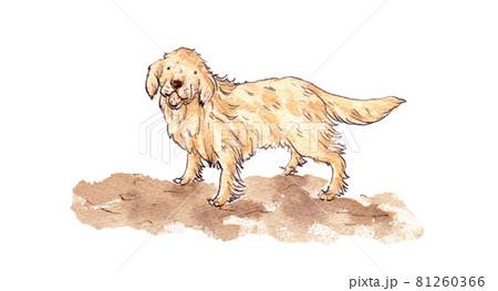老犬 81260366