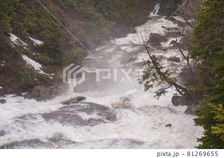 朝もやの平滑の滝 新緑の雪解けの流 81269655