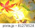 秋イメージ  81278528