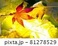 秋イメージ  81278529