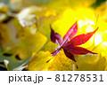 秋イメージ  81278531