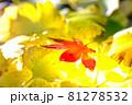 秋イメージ  81278532