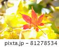 秋イメージ  81278534