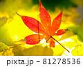 秋イメージ  81278536