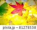 秋イメージ  81278538