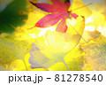秋イメージ  81278540