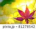 秋イメージ  81278542