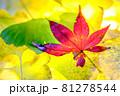 秋イメージ  81278544