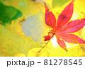 秋イメージ  81278545