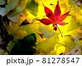 秋イメージ  81278547