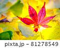秋イメージ  81278549