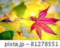 秋イメージ  81278551