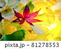 秋イメージ  81278553