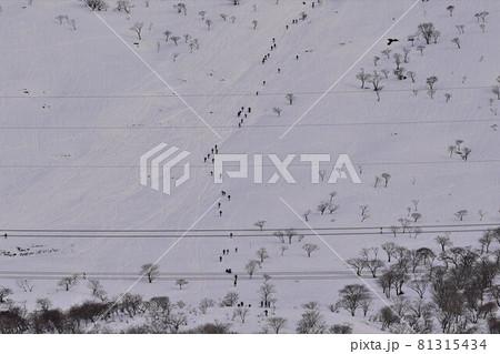 冬の伊吹山の急斜面を登る登山者の列 81315434