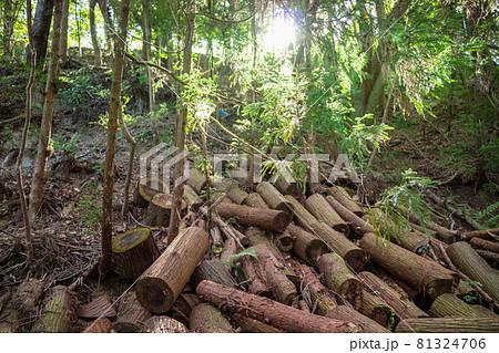 山の斜面に積み上げられた木の丸太 81324706