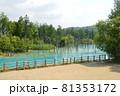 北海道美瑛町の青い池の景色 81353172