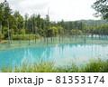 北海道美瑛町の青い池の景色 81353174
