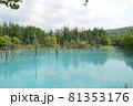 北海道美瑛町の青い池の景色 81353176