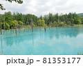 北海道美瑛町の青い池の景色 81353177