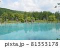 北海道美瑛町の青い池の景色 81353178