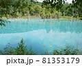 北海道美瑛町の青い池の景色 81353179