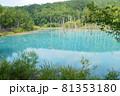 北海道美瑛町の青い池の景色 81353180