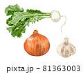 手描きの野菜のイラスト 81363003
