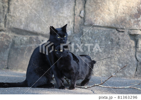子猫の肩に優しく手を置く黒猫母猫 81363296