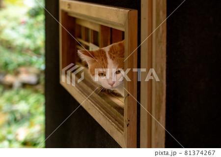 小窓から顔をのぞかせる受付の看板猫 81374267