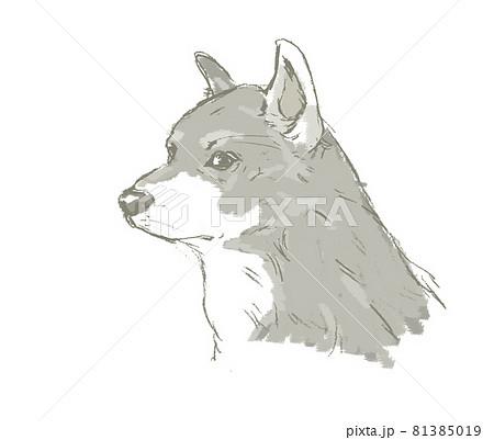 日本犬 81385019